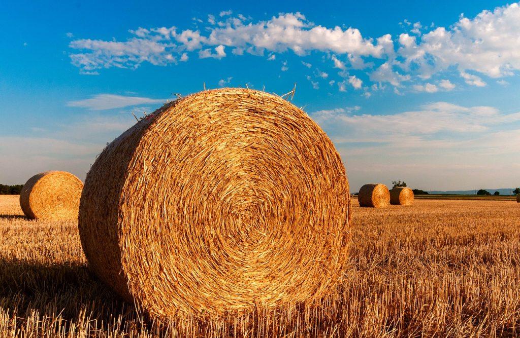 Ochrona fungicydowa - jak chronić nasze zbiory?