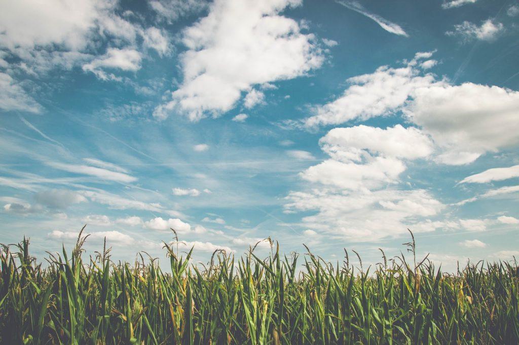 Dlaczego potrzebujemy środków ochrony roślin